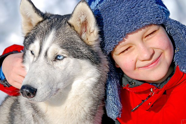 Happy boy with husky dog
